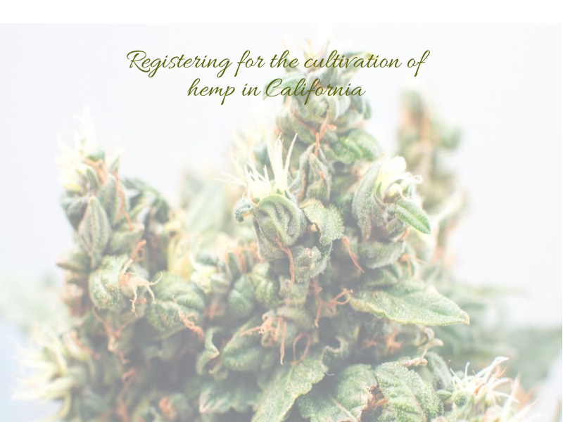 Registering for the cultivation of hemp in California